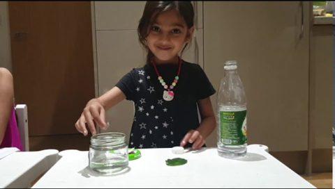 Acid Rain Experiment STEM Experiment