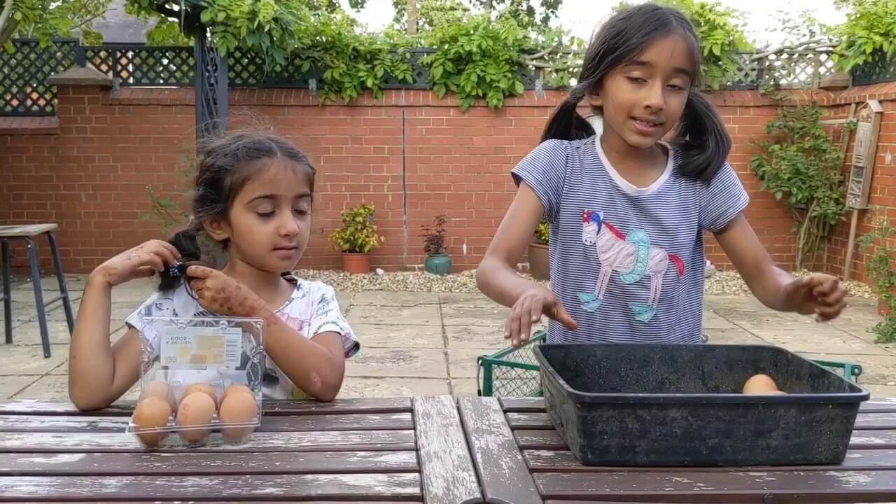 Which Eggs Are Stronger? Caged Chicken Eggs Or Free Range Chicken Eggs?