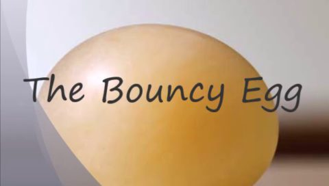 Bouncy Egg Science Experiment