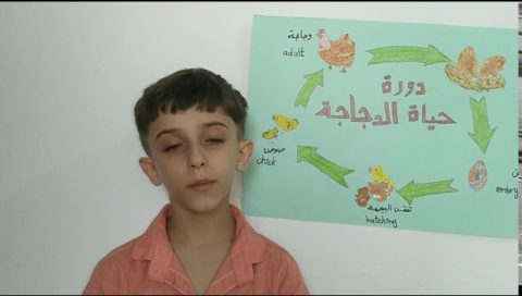 Science Project On The Life Cycle Of The Chicken مشروع علوم عن دورة حياة الدجاجة